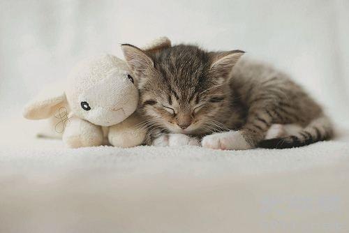 猫咪为什么那么喜欢睡觉?猫咪打瞌睡的原因